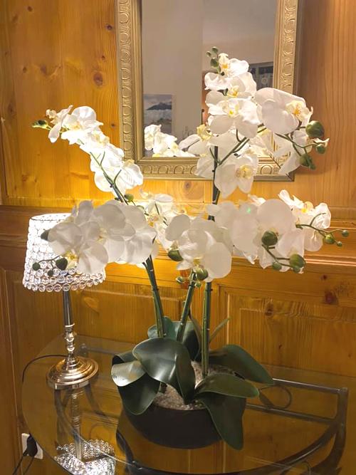 orchidée dans l'entrée de la demoiselle des roches